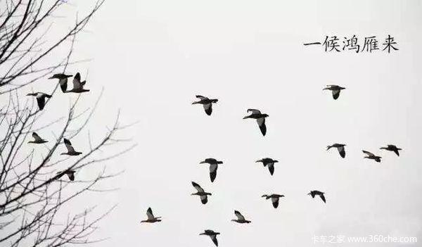 秋天燕子南飞简笔画